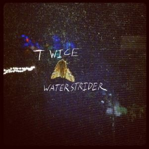 Picture of Twice (Little Dragon Cover)Waterstrider at Stereofox