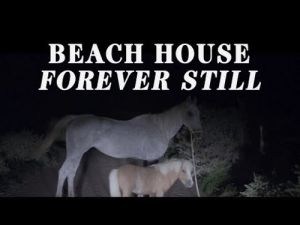 Picture of Video Review: Beach House