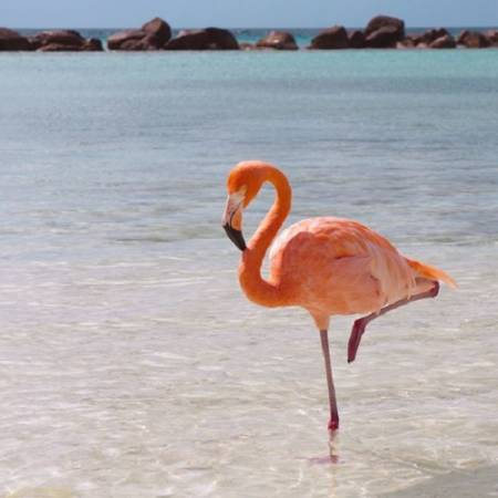 Picture of Flight of The Flamingo Flamingosis  at Stereofox