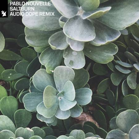 Picture of Saltburn (Audio Dope Remix) Pablo Nouvelle Audio Dope  at Stereofox